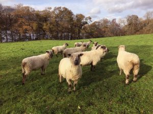 Dodgson Wood - Shear Delight fibre flock
